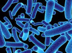 «Интимные» бактерии помогают защищаться от ВИЧ