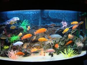 Красивый аквариум – лучшее средство в борьбе со стрессом