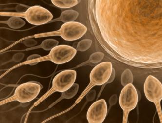 Ученые придумали механизм действия оральной контрацепции для мужчин