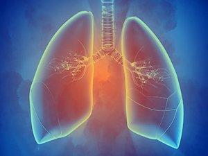 Польза тысячелистника при туберкулезе