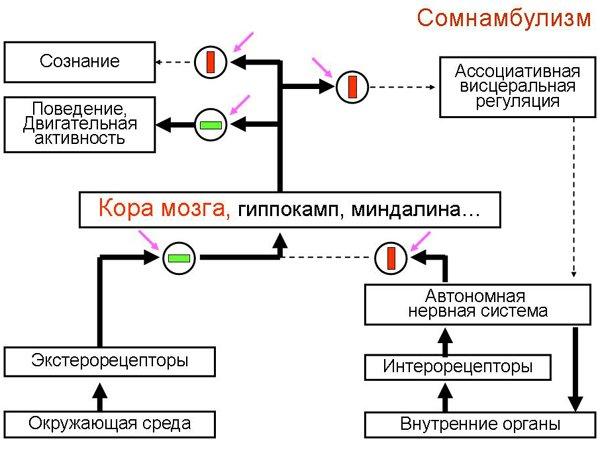 Схема сомнамбулизма