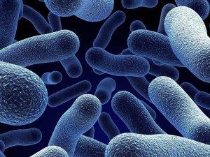 Инфекционное заражение как причина повышения лейкоцитов