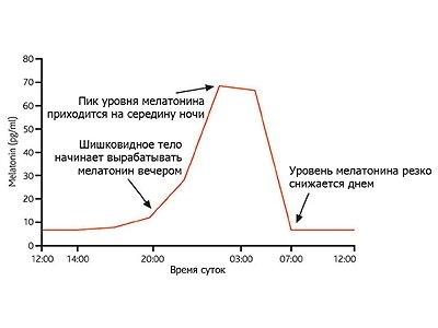 График распределения  мелатонина