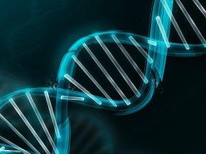 Одинаковый набор хромосом у близнецов