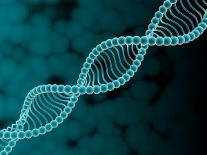 Лишняя хромосома - причина синдрома Дауна
