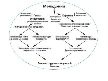 Действие мельдония дигидрат