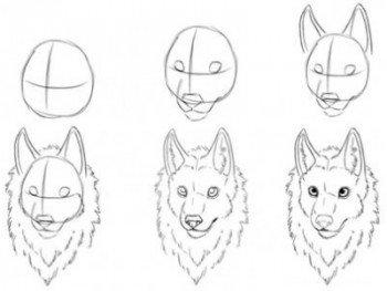 Поэтапаное рисование морды волка