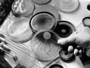 Открытие пенициллина