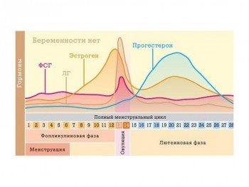 Уровень гормонов в овуляционный и другие периоды менструального цикла