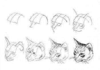 Рисуем кота поэтапно 3