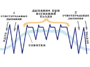 Схема дыхания при родах