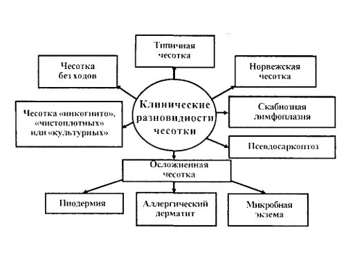 Разновидности чесотки