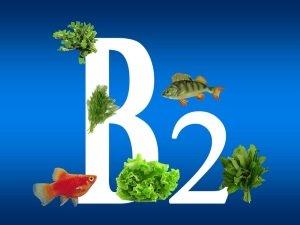 Нехватка витамина B2 - причина заедов