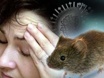 Женщина и мышка